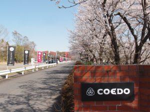 COEDO花見-Hanami-2018 入口